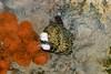 Moray Eel - Monterey Aquarium (3) D