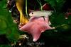 Starfish - Monterey Aquarium (10) D