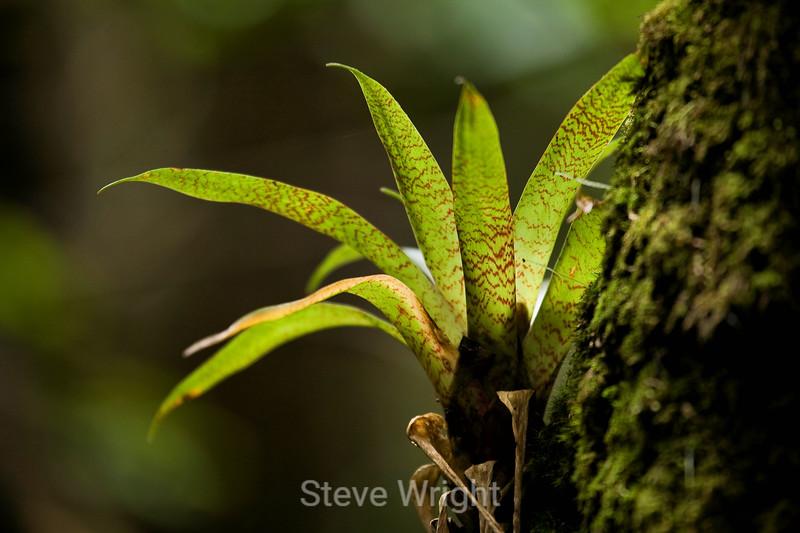 Bromeliads - Poas Volcano - Costa Rica (5) D copy
