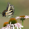 Shot with a 400mm Beautiful Butterfly Posing