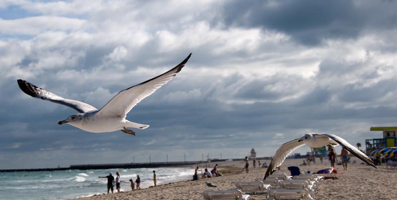 Miami Beach Birds - 2008