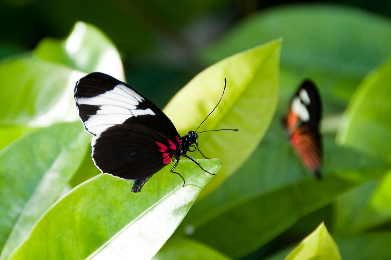 Key West Butterfly & Nature Conservancy