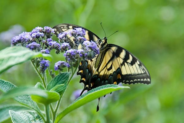 Random butterfly in Washington DC 2006