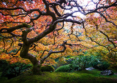 All Things Relative - Portland Japanese Garden, Oregon