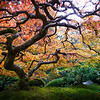 *All Things Relative - The Portland Japanese Garden // Portland, Oregon*
