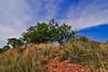 Yucca & Mesquite