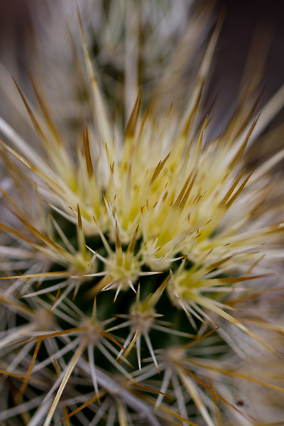 A little hedgehog cactus up close - but not too close those spines are very sharp.