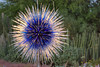 The Chihuly sculpture Sapphire Star at the entrance to the Phoenix Desert Botanical Gardens