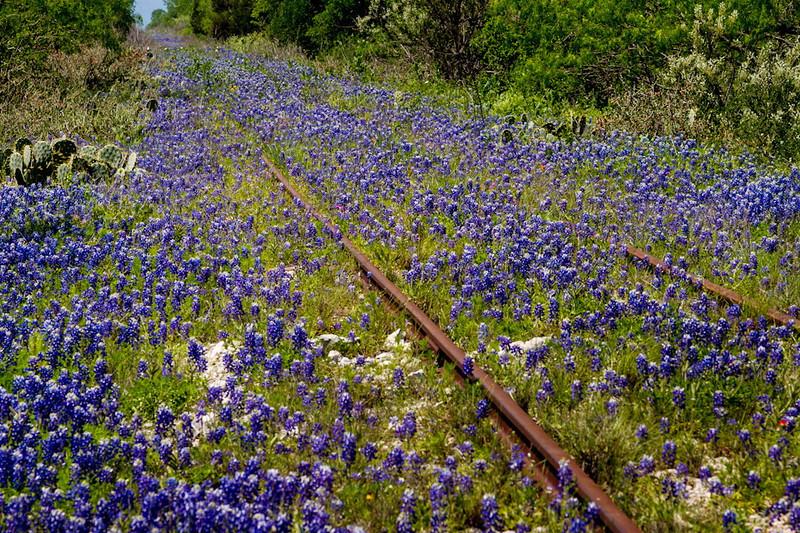 Blue Bonnets run along an old railroad track