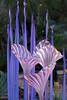 a sculpture by Chihuly - Erbium Pink Fiori
