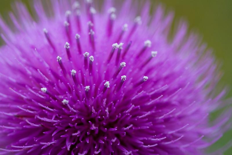 A purple flower up close