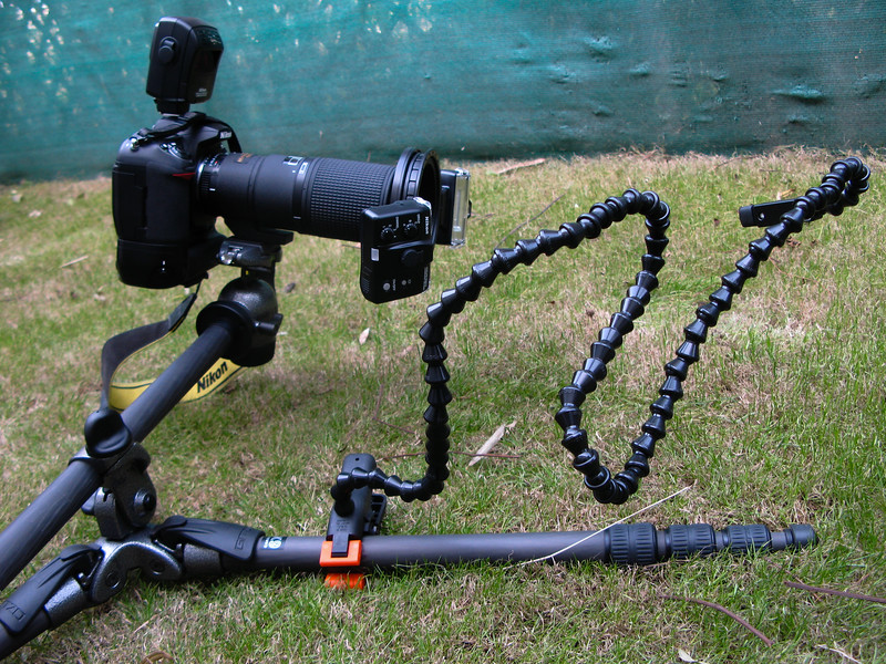 I use the Gitzo GT2541EX tripod and Gitzo GH2780QR ball head (along with Gitzo GS5370C quick release plate) for macro photography. I got couple of GS5370C quick release plates, so that I keep them mounted all the times on my 200mm macro lens, my D200 and D3S. This way I don't have to keep on changing if I had only one. The GT2541EX is an excellent tripod and can be laid flat on the ground and its 4th arm allows one to get to various angles / positions for insect photography with ease and quickly. Also, the legs flow freely and dont have steps to lock in certain position. Complete flexibility for macro photography and a must have for macro photogaphers.