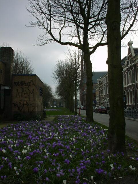 Spring in Groningen, Radesingel, just outside my apt