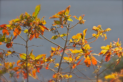 Fall colors in Long Key Natural Area & Nature Center, Davie, Fla., November 2014.