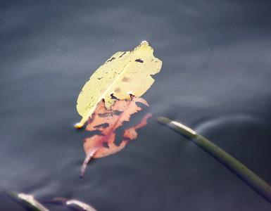 Leaves, etc., Anne Kolb Nature Center, Hollywood, Fla., November 2014.