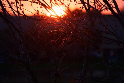 Sunset, Pembroke Pines, Fla., February 2015.