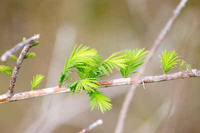 Signs of spring. Chapel Trail Nature Preserve, Pembroke Pines, Fla., March 2015.