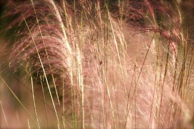 Ladybug lost in pink and green, Long Key Nature Center, Davie, Fla., November 2014.