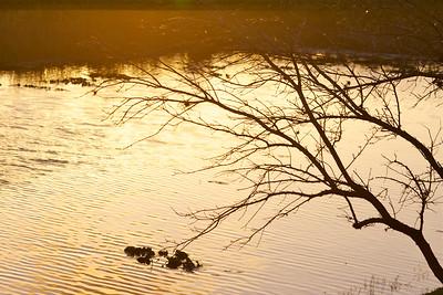 Late fall's beautiful light, Pembroke Pines, Fla., December 2014.