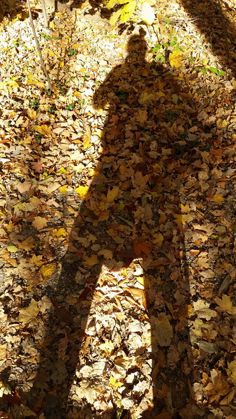 Me and my shadow, Rowe Woods, Cincinnati Nature Center, Milford, Ohio. October 2014.