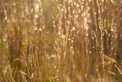 Dragonfly in Autumn's light, Long Key Natural Area & Nature Center, Davie, Fla., November 2014.