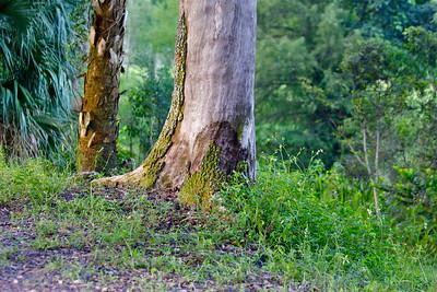 Tree Tops Park, Davie, Fla., August 2014.