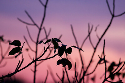 Lavender and pink hues at dusk, Pembroke Pines, Fla., January 2015.