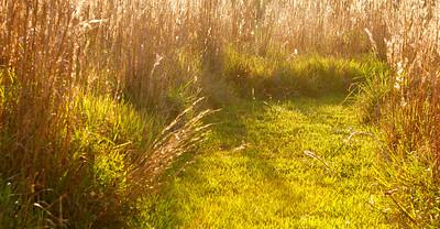 Long Key Natural Area & Nature Center, Davie, Fla., November 2014.