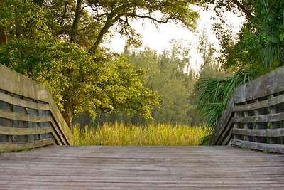 """Over the bridge we go...."" Tree Tops Park, Davie, Fla., August 2014."