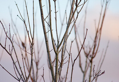 Chapel Trail Nature Preserve, Pembroke Pines, Fla., February 2015.
