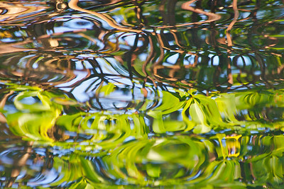 Reflections of mangroves and foliage, Anne Kolb Nature Center, Hollywood, Fla., November 2014.