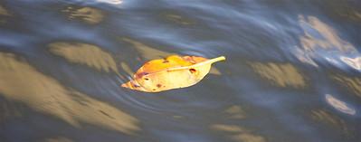 Leaf, Anne Kolb Nature Center, Hollywood, Fla., November 2014.