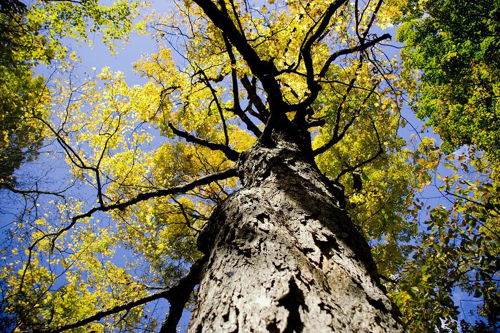 tree  - Peeka Moose_0067