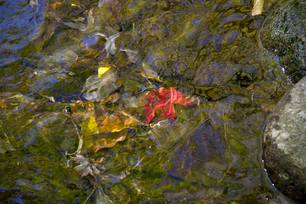 abstract leaf in water Peeka Moose_0056 a1a_edited-1 1280 reneezernitsky