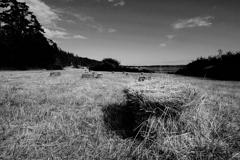 Shaw Island Hay Field