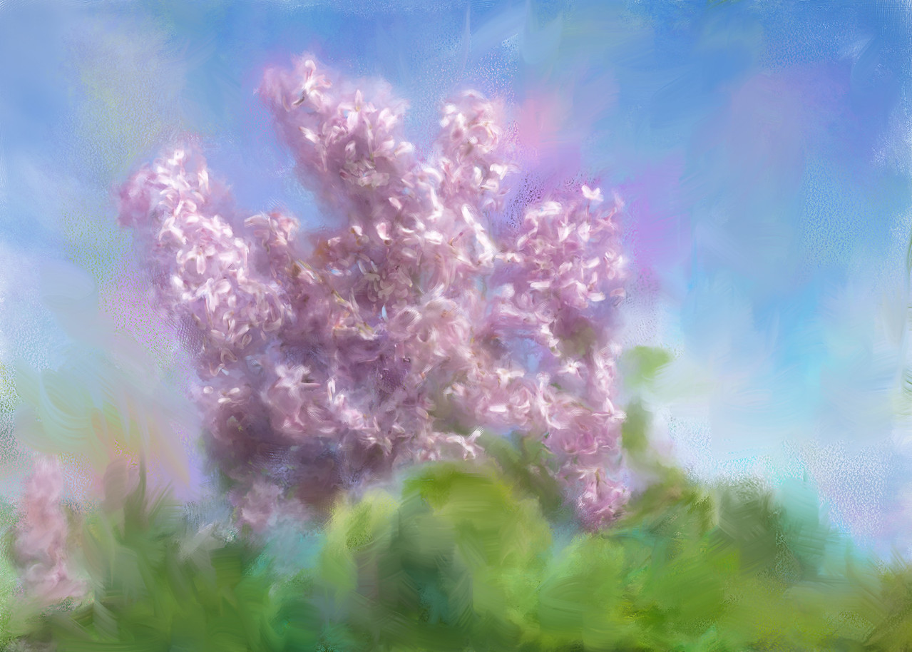 The Colour of Lilacs