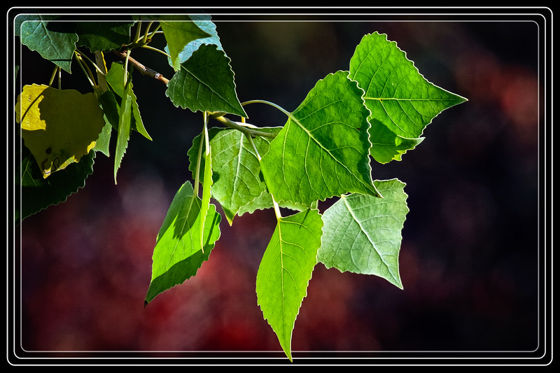 """Leaves Natures Sun Catchers...  </font> <a href=""""http://www.rickwillis-photos.com/Portfolio/Best/Hidden-Photos-Without-Frames/26709550_DZD78d#!i=2358312052&k=XLwgWkn""""> <font color=""""Red""""> Link to Photo Without Frame </a> </font>"""