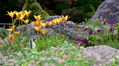 springtime flower bed at the Frelinghuysen Arboretum
