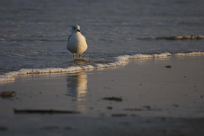 seagull on beach at sunset