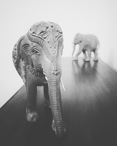 Elephants at Home
