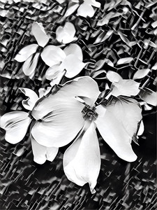 Dogwood Digital Sketch
