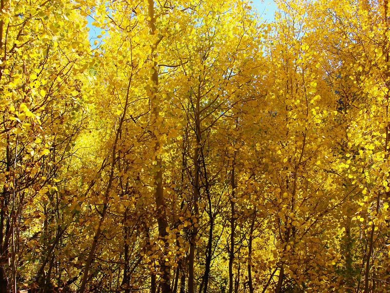 Colorado Vail (2)