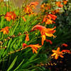 CH006024 Garden flowers Aug 18