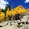 Colorado Fall Colors 3