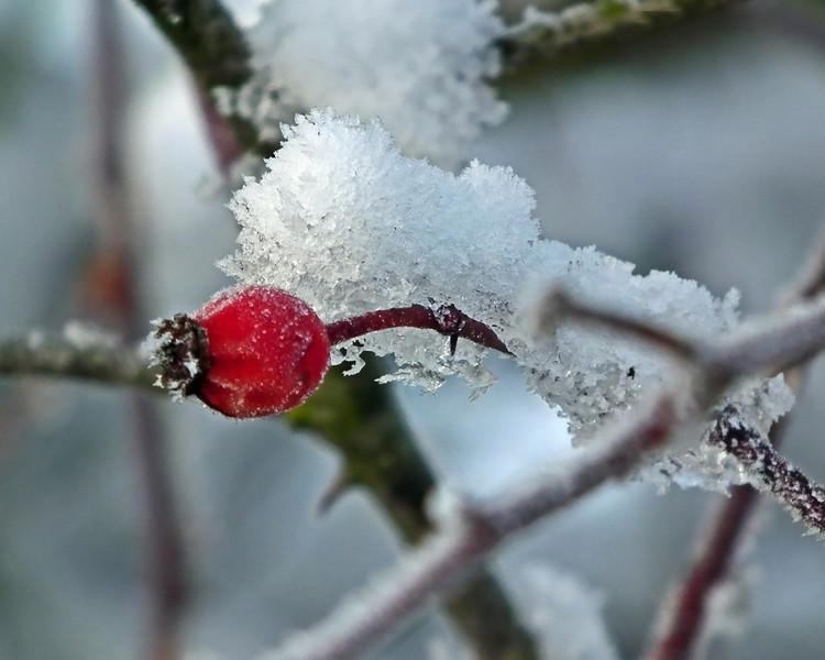 Snow scene, Springwell, Eighton Banks, Gateshead 02
