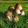mushrooms in Washington (Oct 2012)