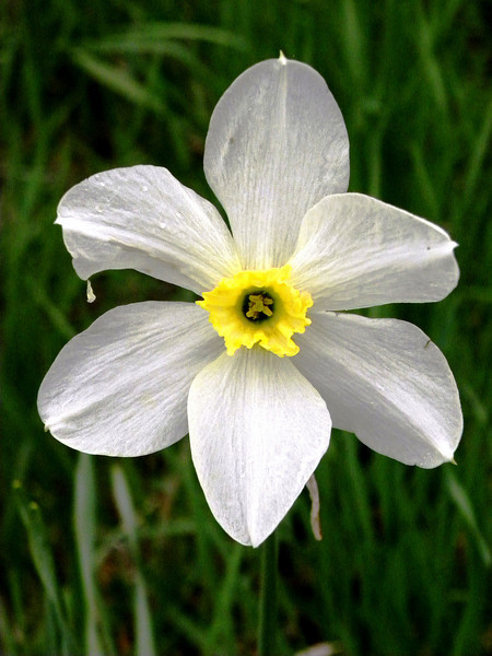 Enhanced Flower