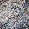 This is a 3' long California King Snake. This snake will kill and consume a rattler. The king snake is immune to the venom of a rattle snake. King snakes are often kept as pets as they can be easily domesticated.