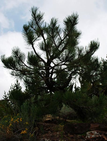 Evergreen Vail Colorado