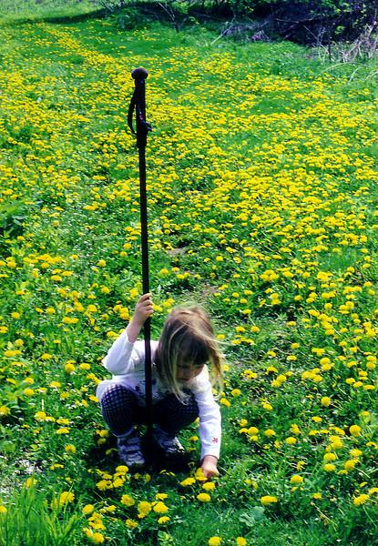 Grace In The Dandelions